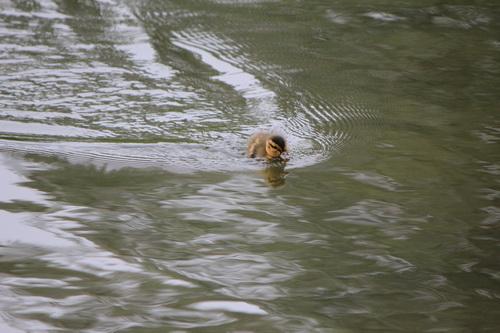 Nadando 1