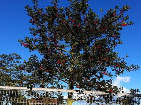 AV Granda - CAMPAÑA DE COMPOSTAJE DOMÉSTICO 2012 - Asociacion de Vecinos Santo Tomas de Granda